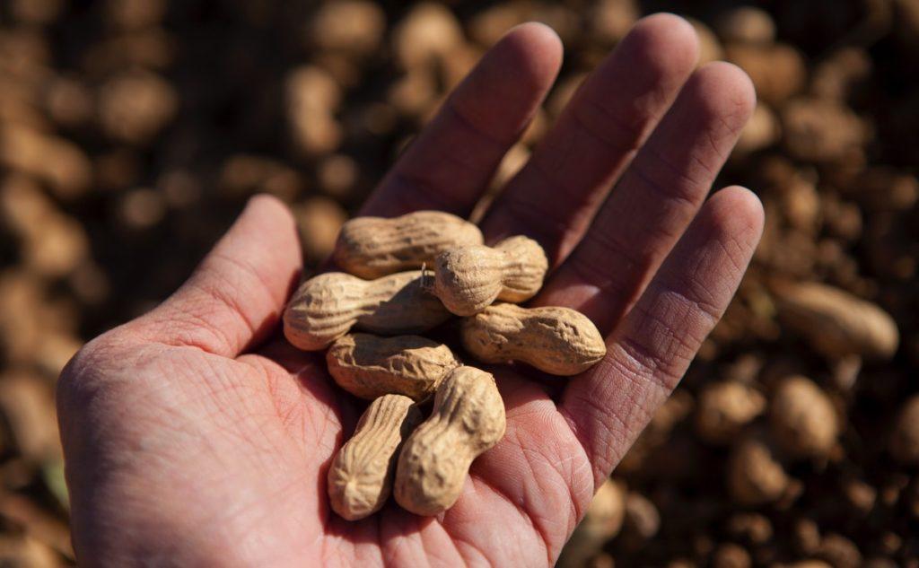 Что такое арахис бланш?