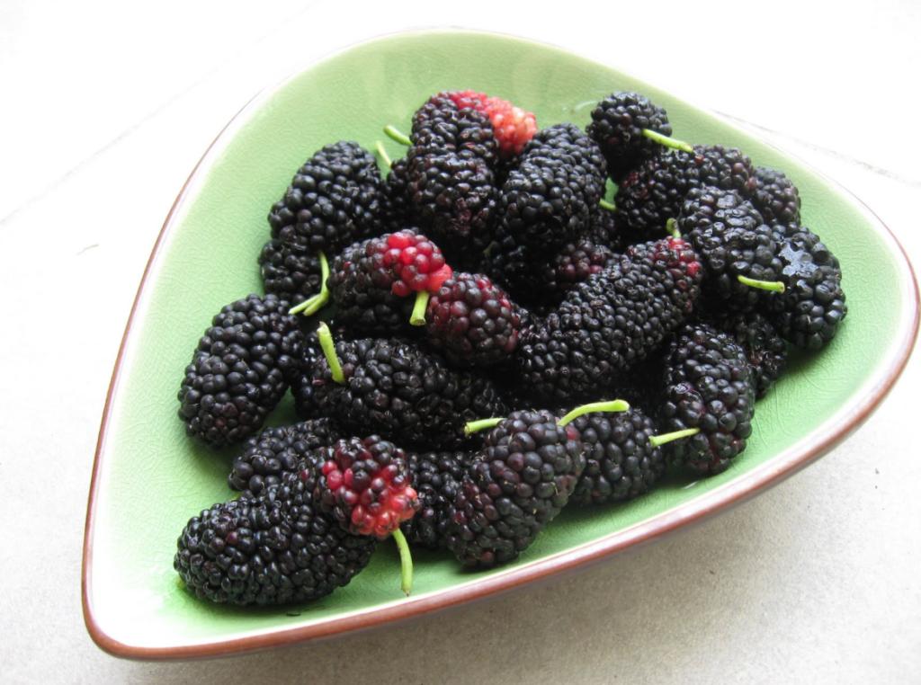 Сколько ягод шелковицы нужно, чтобы получить полезные свойства